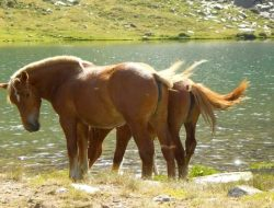 caballos-vall-de-sorteny