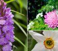 jardin-botanico-sorteny