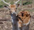 parque-animales-naturlandia-cervatillos-2