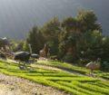 Jardins de Juberri