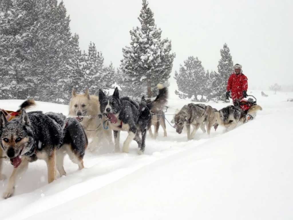 mushing-paseo