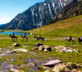 Paseos a caballo en el lago